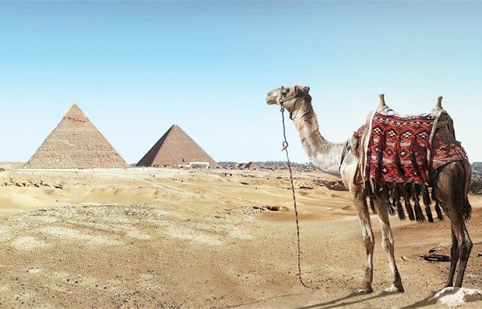 多伦多埃及签证